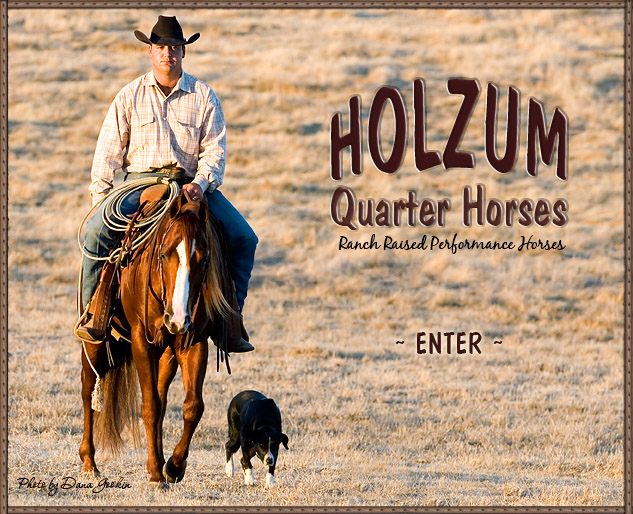 Holzum Quarter Horses is proud to stand to the public Shining Leo Lena and Codys Shining Spark, both stallions are by the legendary NRHA and NRCHA multi-million dollar sire Shining Spark.